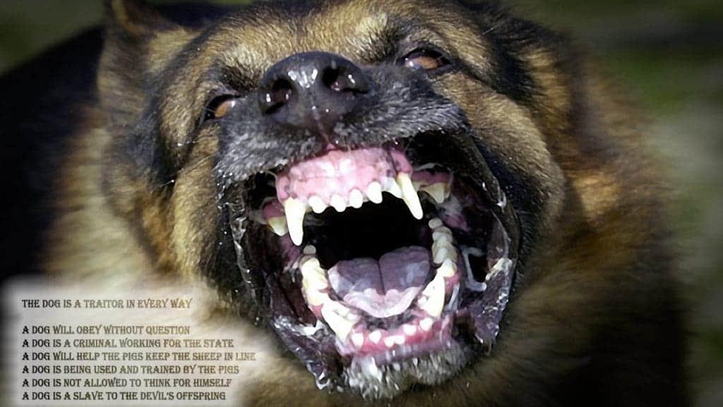 dog traitor